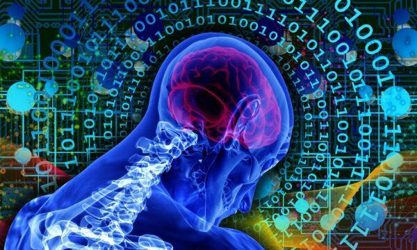 Il sistema cognitivo umano nel web (Mooc)
